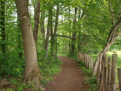 Waldweg an der Muggliwiese